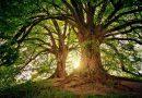 Leśne ścieżki przyrodniczo – dydaktyczne